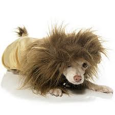 Lion_Cub_Dog_Costume_birthdayexpressdotcom