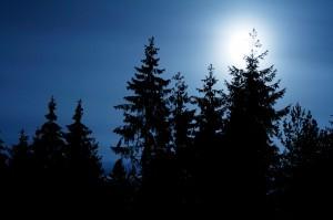 forestnight-300x199