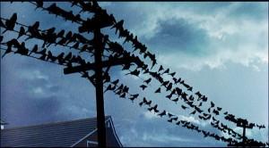 The-Birds-600x332